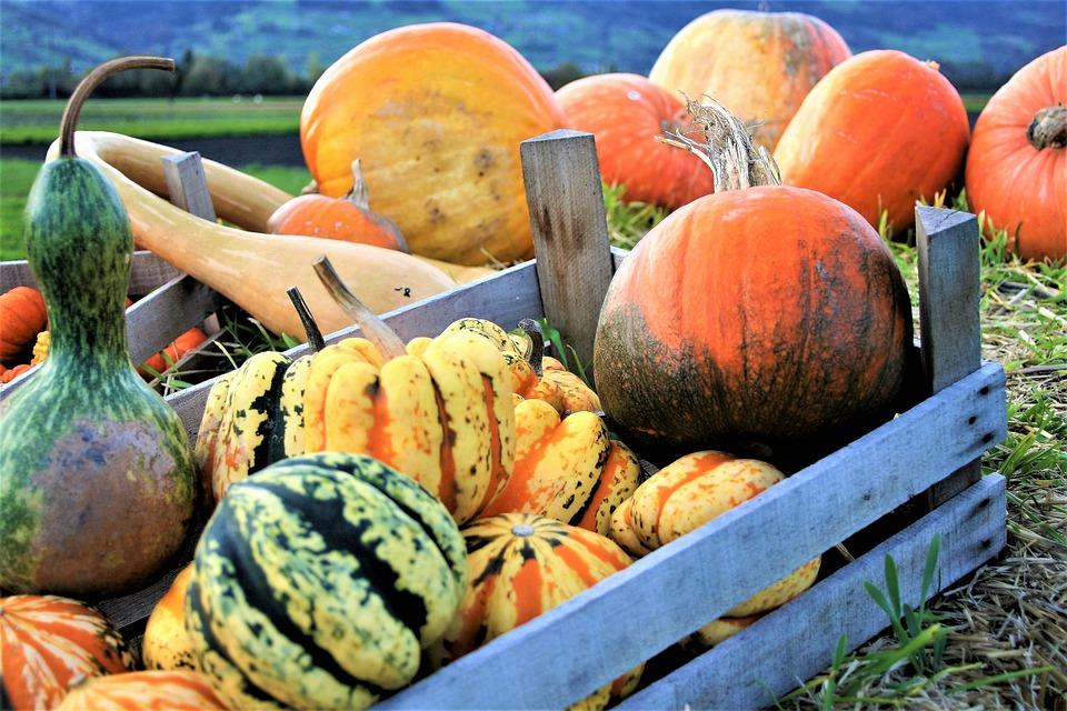 Prydnads Pumpor, Grönsaker, Hösten, Halloween, Orange