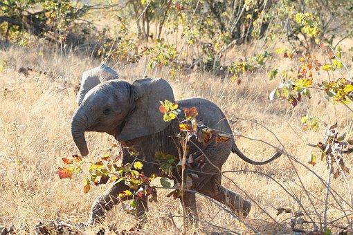 哺乳動物, アフリカ, 象, 象の赤ちゃん, 動物, 野生動物