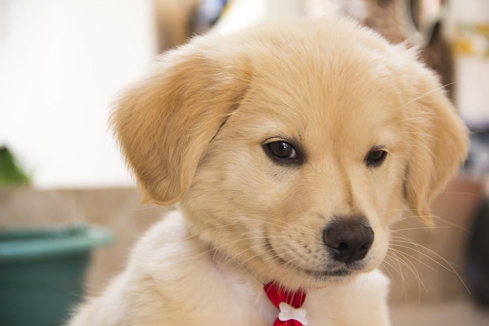 dog cute puppy 183 free photo on pixabay