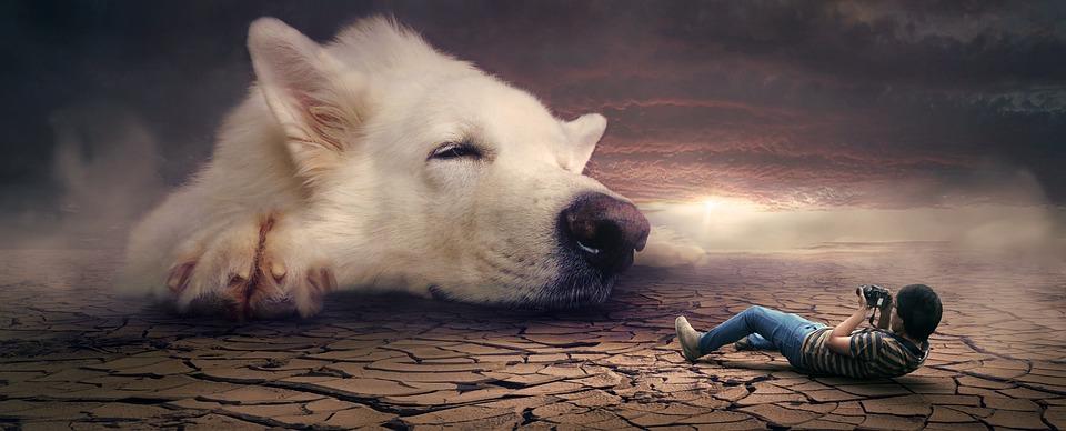 ファンタジー, シュール, 夢, 犬, フォトモンタージュ, 神秘的な, 雰囲気, 気分, 大気, おとぎ話