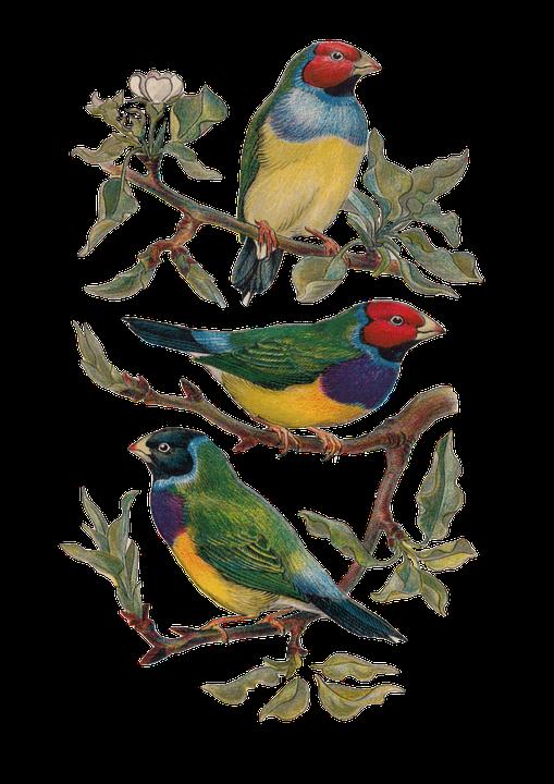 Vintage Bird Plate 183 Free Image On Pixabay