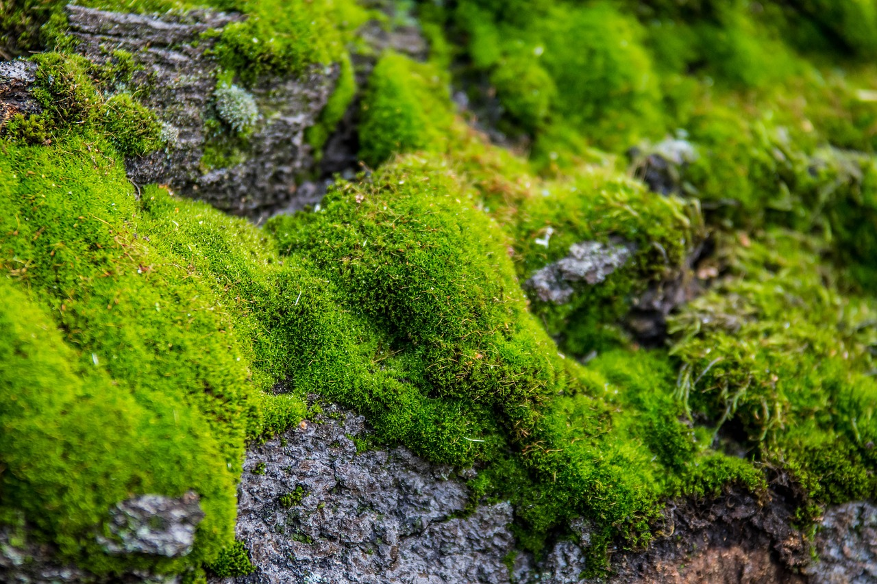 курсе природа фотографии о мхах крепят штатным буксировочным