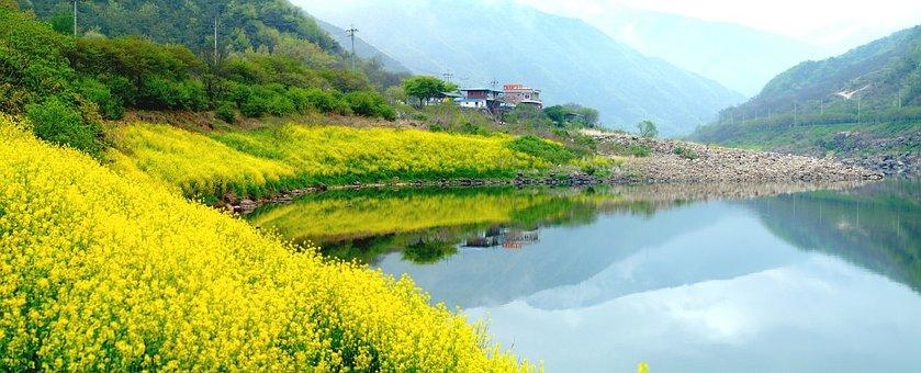 Paisaje, Seomjin, Con Flor