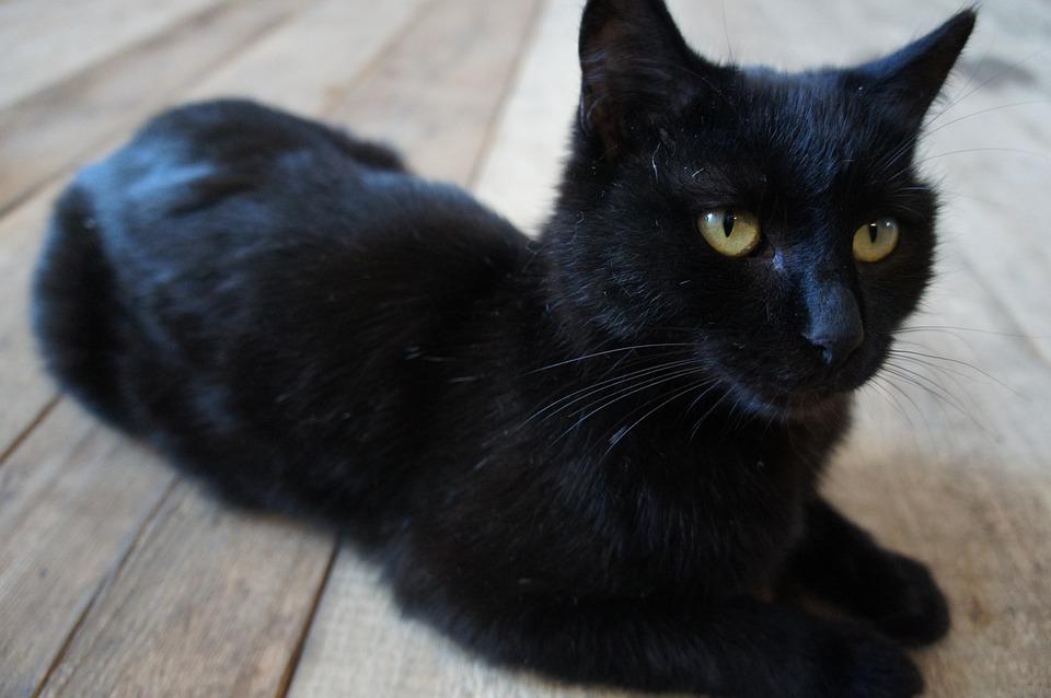 Black Cat Panther Meme