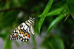 butterfly, insert, nature