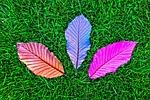 leaf, grass