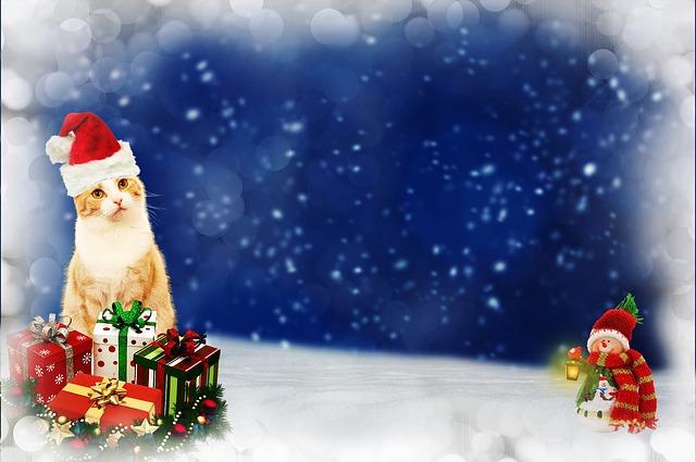 cat christmas gifts  u00b7 free image on pixabay