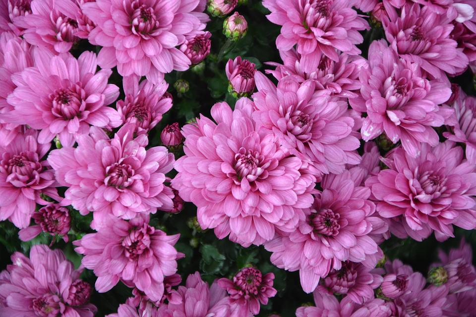 Flowers Pink Color Purple Free Photo On Pixabay