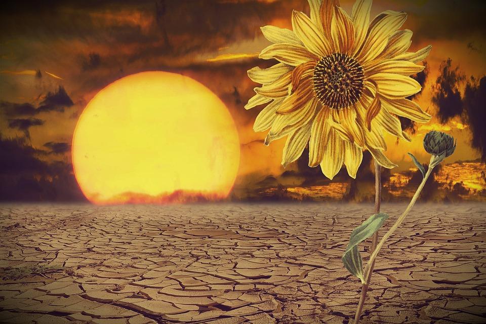 Sol Girassol Deserto Flor Foto Gratuita No Pixabay