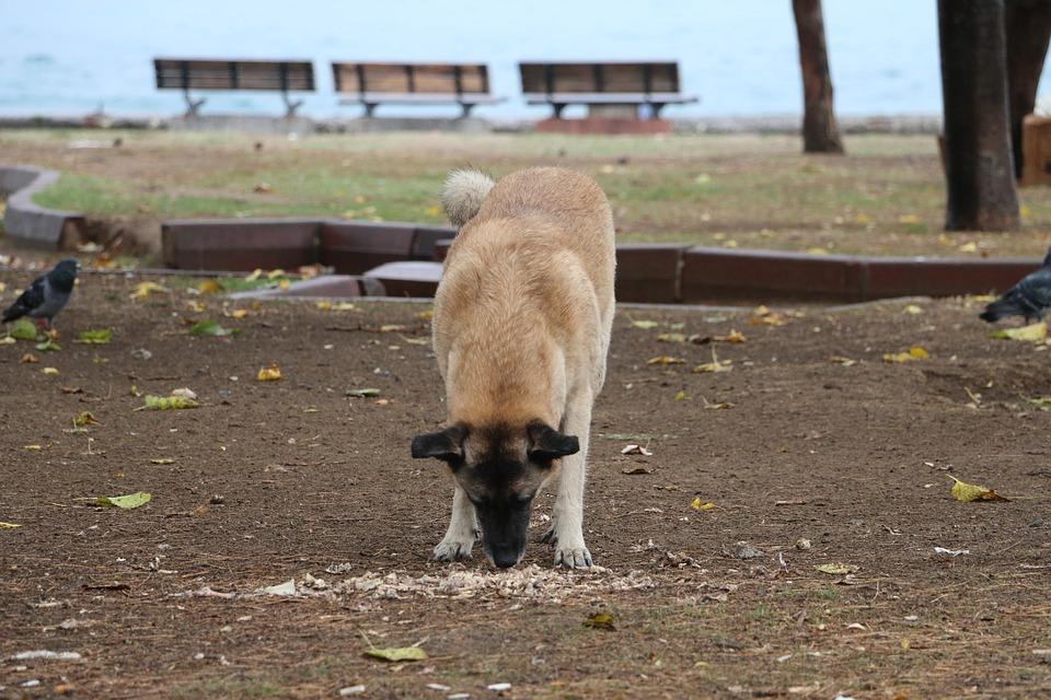 Best muilkorf voor honden – een top 4.