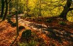 leaves, landscape