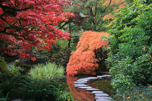 Japanese Garden Path Trees Nature