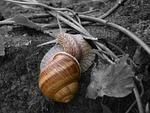 slug, nature, animal