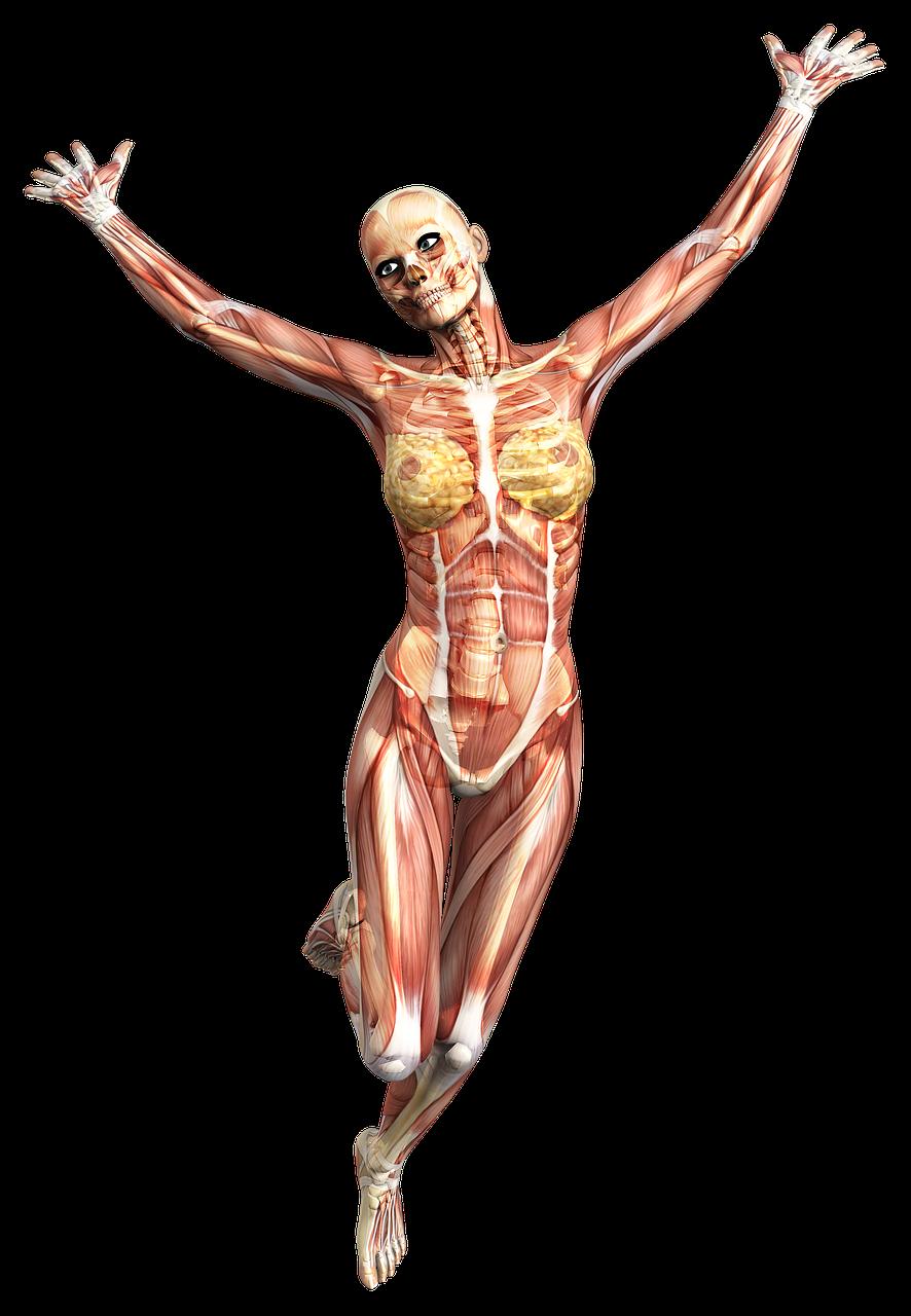Прикольные картинки мышцы, днем рождения светлана