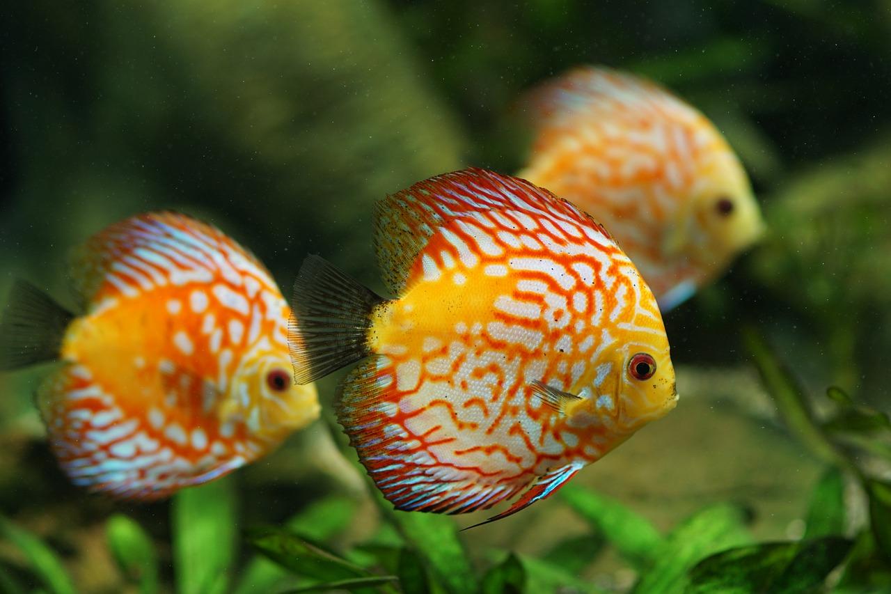 Рыбы аквариумные в картинках