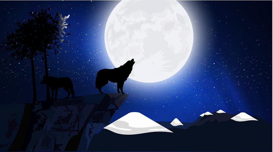 Wolf, Dämmerung, Neumond, Heulen, Hügel, Wolf Team