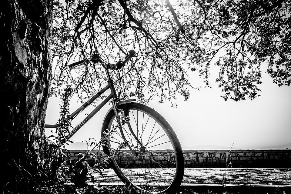 Free Photo Bike Black And White Tree Autumn Free Image On