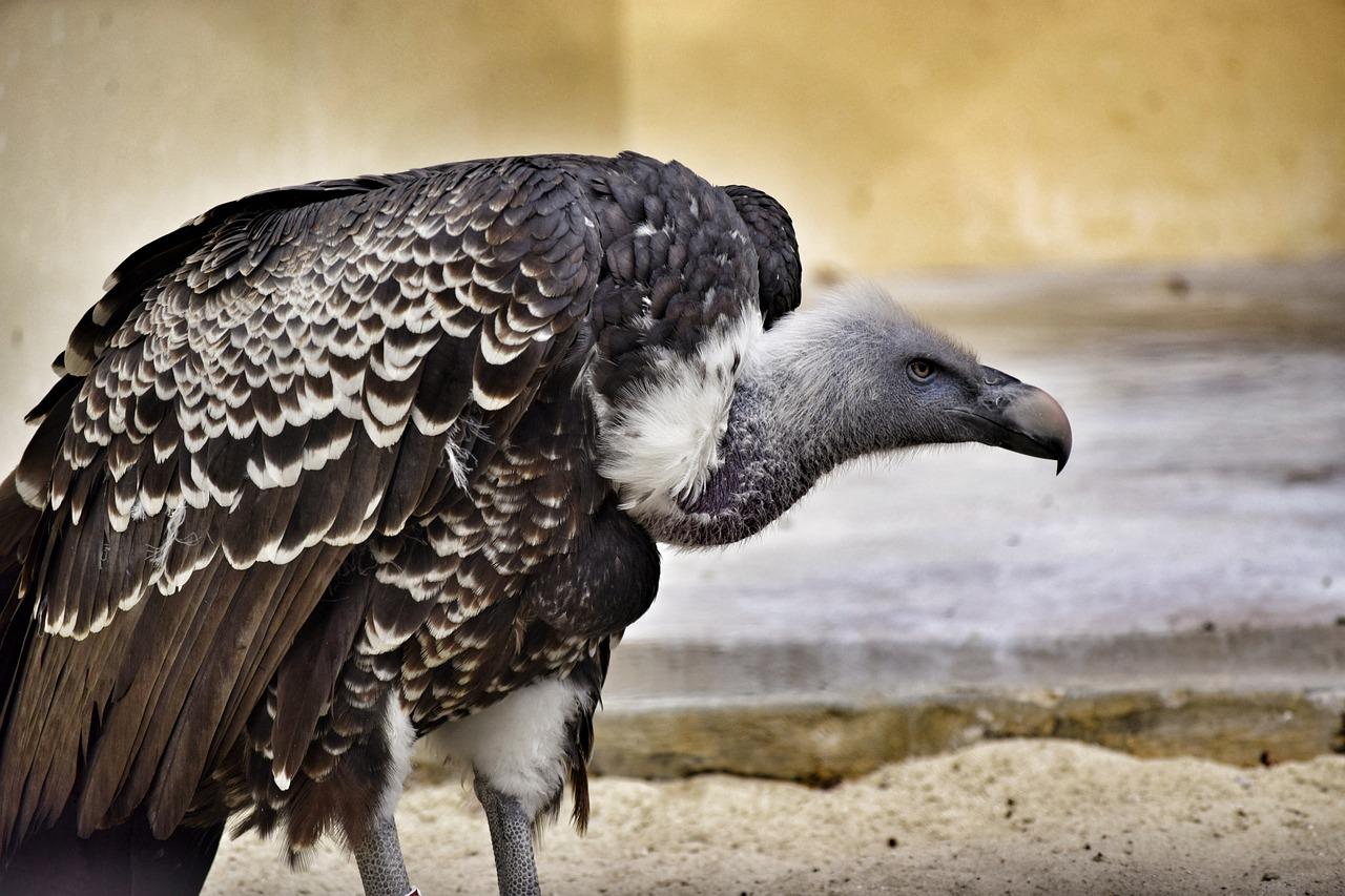 Хищные птицы башкортостана фото с названиями окуня балансир