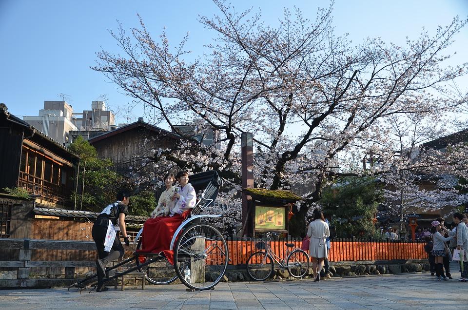 Japan, Japón, Kyoto, Sakura, Spring