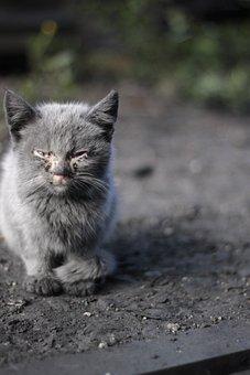 Anak Kucing, Penyakit, Kehidupan