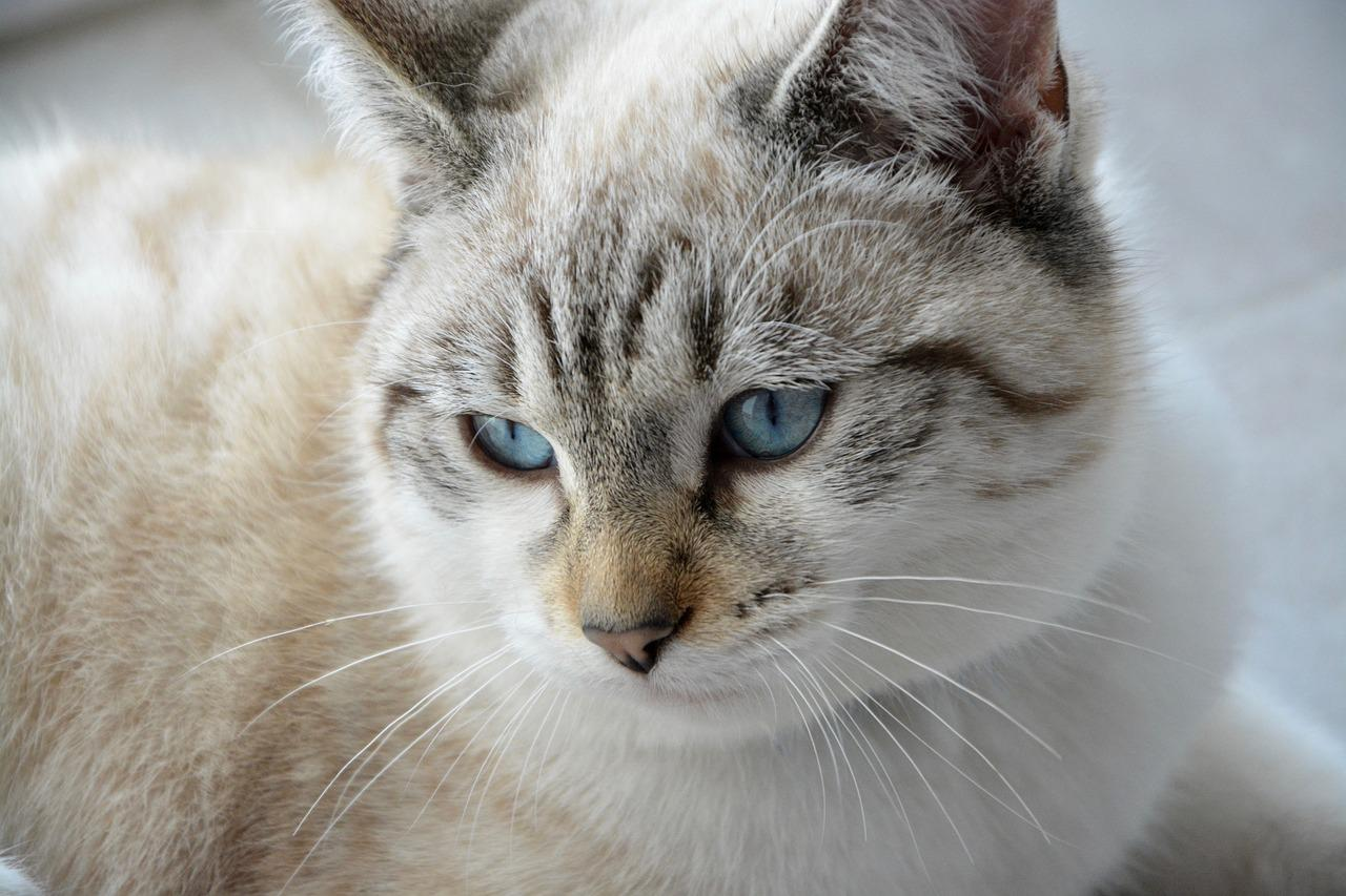 home remedies female cat bladder infection