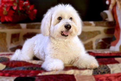 Cão, Cachorro, Animal