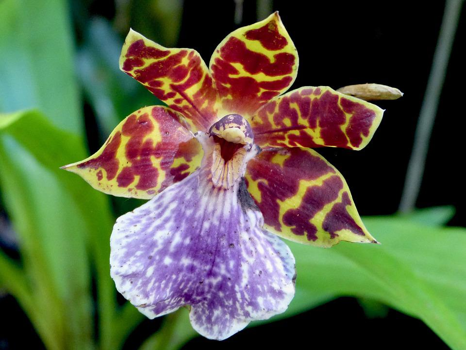 Orchidee Fleur Ile De La Reunion Photo Gratuite Sur Pixabay
