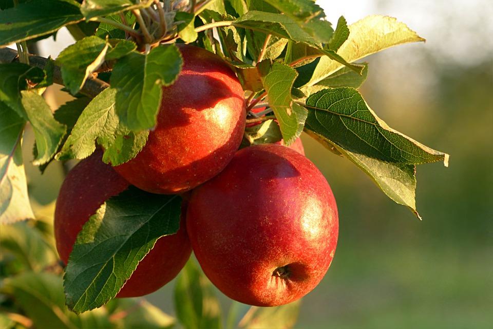 Ovoce, Apple, Malum, Červená, Zdravé, Jabloň