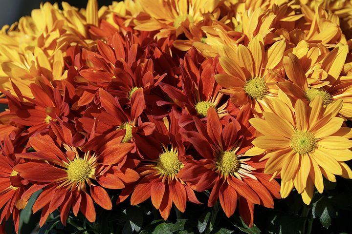 картинка цветы осени уникально числу