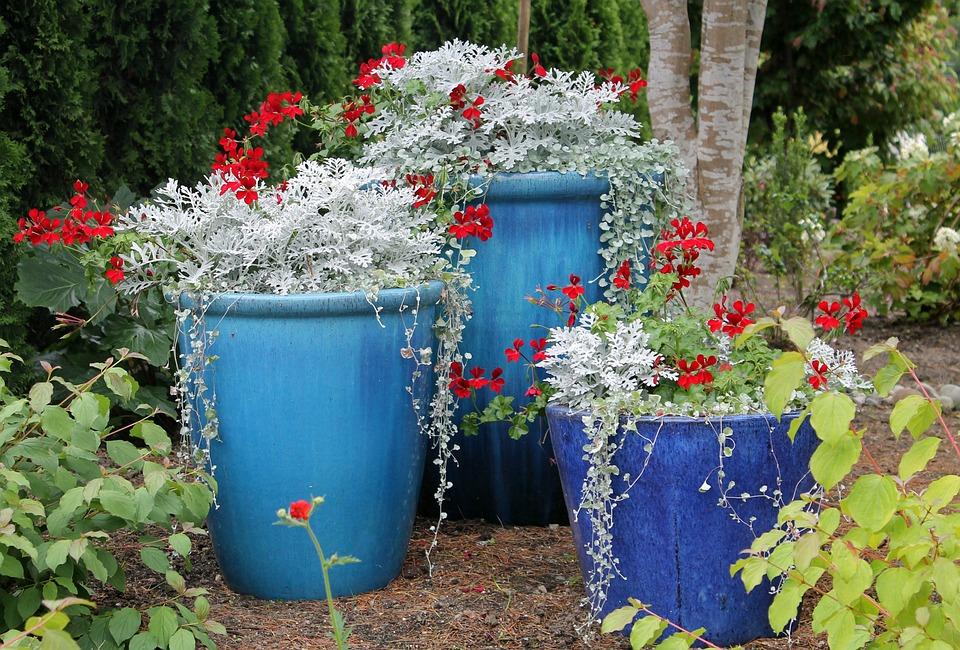 Blumentöpfe Garten Frühlingsblumen Blumen Blau
