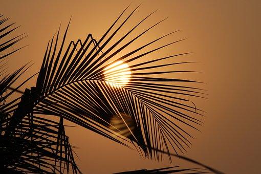 Soleil, Coucher De Soleil, Été, Nature