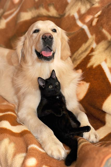 Dog And Cat Ritriver The 183 Free Photo On Pixabay