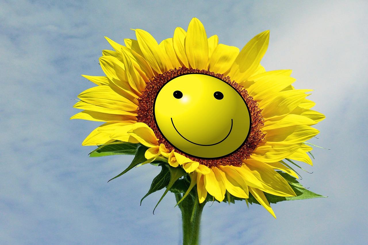 здание картинка цветов улыбок выбор запчастей для