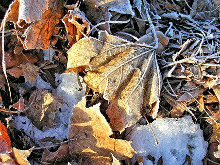 Blätter, Frostig, Getrocknet, Eis, Bunte