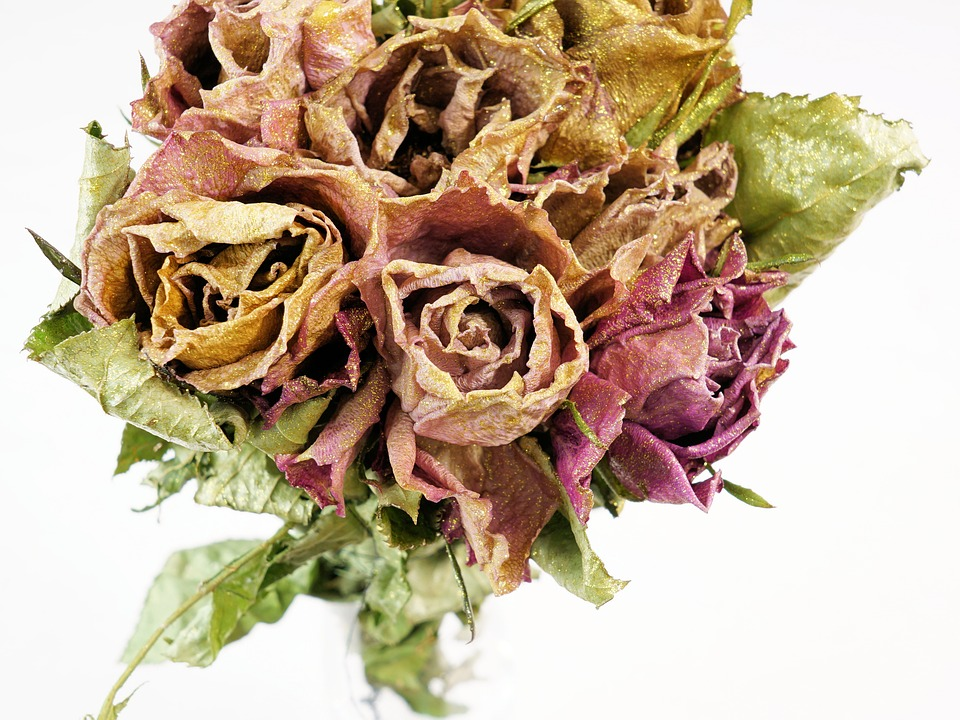 Roses Dry Dried Flowers 183 Free Photo On Pixabay