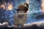 sparrow, birds