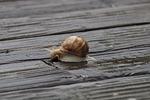 snail, rain
