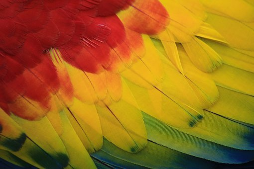 Parrot, Macaw, Red, Amazon, Ave, Bird