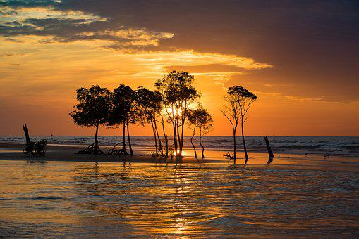 Sky, Sunset, Darwin, Mangrove, Horizon