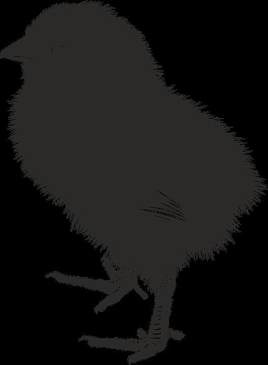 chick animal farm baby silhouette