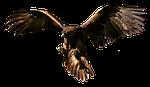 raptor, bird of prey