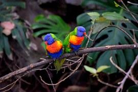 Photo gratuite: Or Perruches, Couple D\u0026#39;Oiseaux - Image gratuite sur Pixabay - 406805