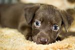 dog, adoption, home
