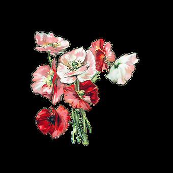 Flowers, Poppies, Poppy, Vintage