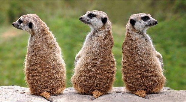 動物, 3, 自然, 哺乳類