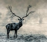 stag, wildlife, nature