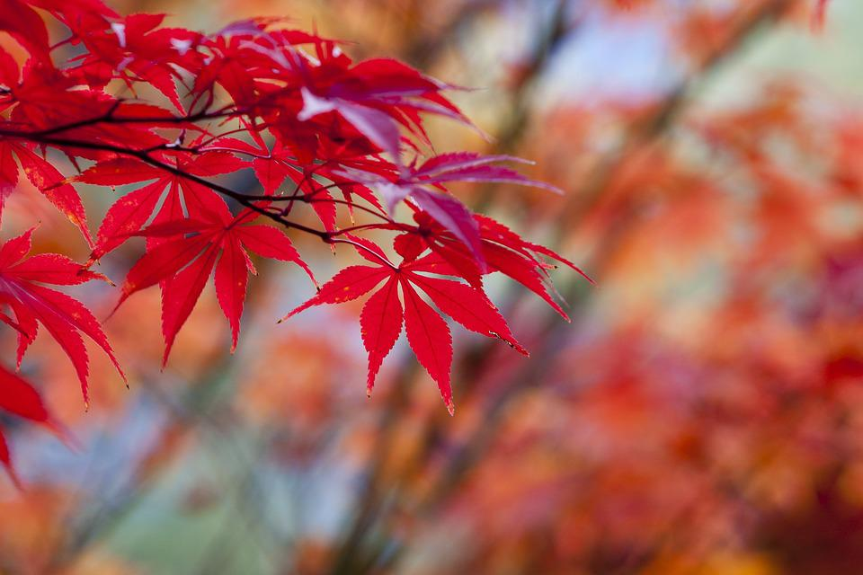 Autumn Leaves Red · Free Photo On Pixabay