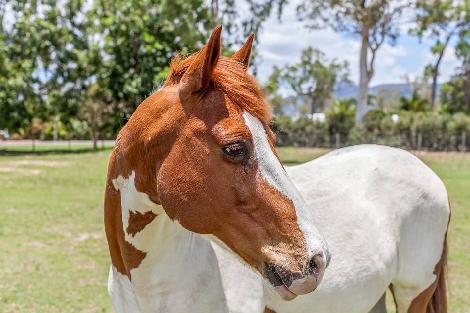 Horse Paint Animal Farm Riding