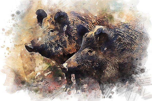 wild boar pig animal 183 free image on pixabay