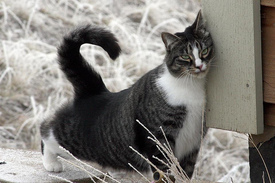 Granule - voňavé, chrumkavé a navyše veľká pochúťka pre vašu mačku.